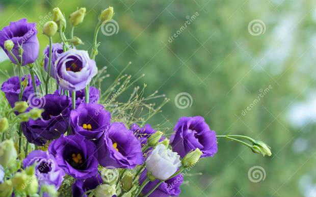 الورد والحب وأرمينيا وعيد الأم… بقلم آرا سوفاليان