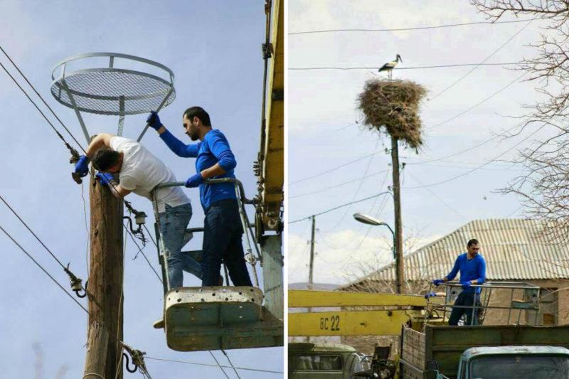 فقط في أرمينيا يبني المواطنون لطائر اللقلق ما يناسبهم لبناء أعشاشهم